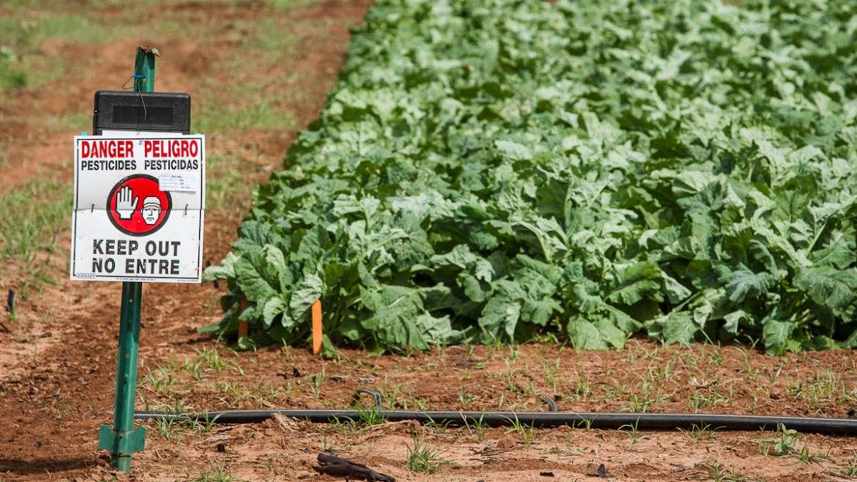 Quels sont les dégâts des pesticides sur l'environnement ?