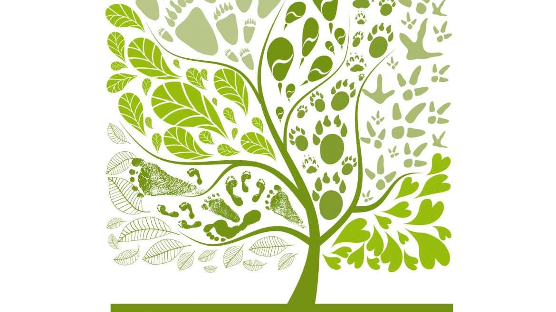 Quelle est la stratégie nationale pour la biodiversité 2011-2020 ?
